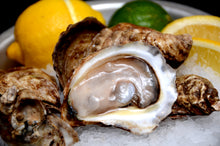 Load image into Gallery viewer, French Kiss 18ct Oyster(Live)