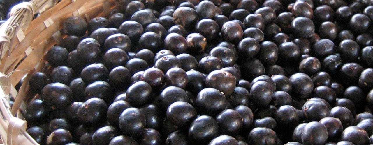 Acai the superfruit