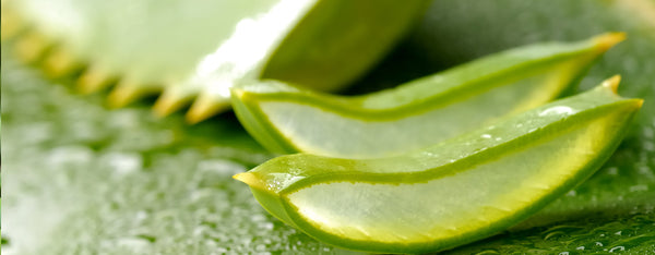 Aloe Vera - Ultimate Detox Smoothie Ingredient