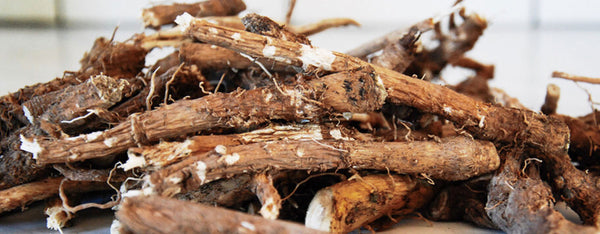 Chickory Root Benefits
