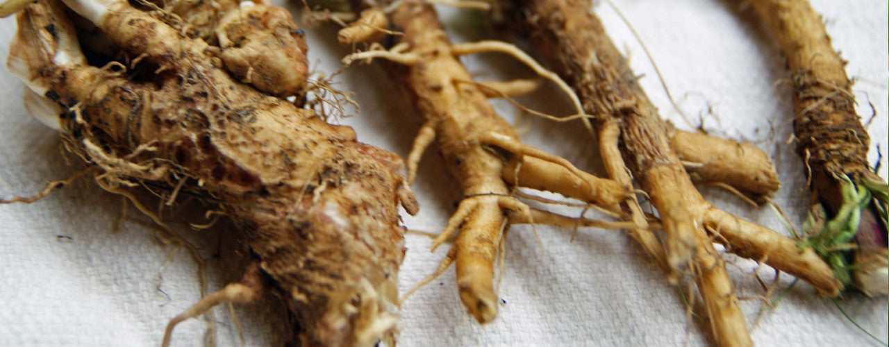 Chicory Root Benefits