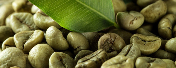 The Fantastic Benefits of Green Coffee Extract