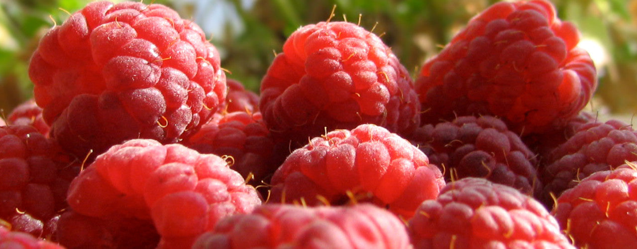 Raspberry - the delicious cure