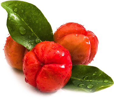 acerola cherry benefits in ultra shake