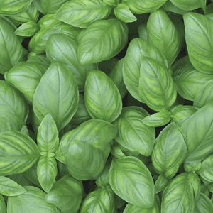 Basil (bunch) - Market Box'd