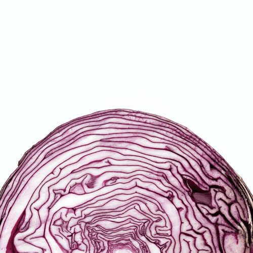 Cabbage Red (ea.) - Market Box'd