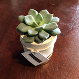 Concrete Round Mini Pot with plant