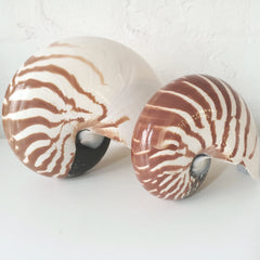 Nautilus Stripe Shell - Sourceress The Store - 1