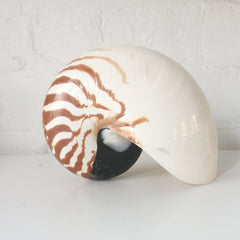 Nautilus Stripe Shell - Sourceress The Store - 2