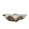 Resin Faux Giant Clamshell Clam 'Natural' 26 CM