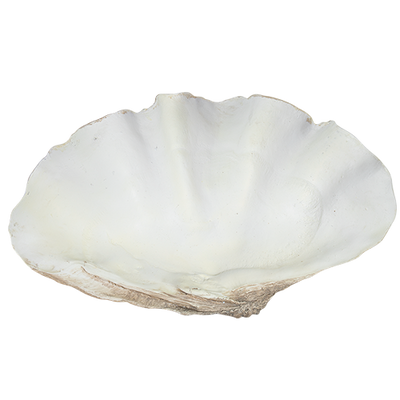 Faux Giant Clamshells - Natural Light 70 CM ***HIRE ONLY***