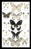 Black & White Butterfly Portrait Set 50.5 CM