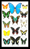 Coloured Butterfly Portrait Set 50.5 CM