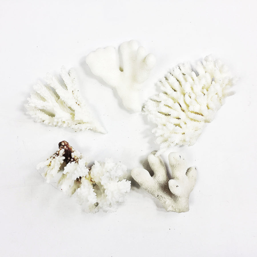 Mini Coral Bundles