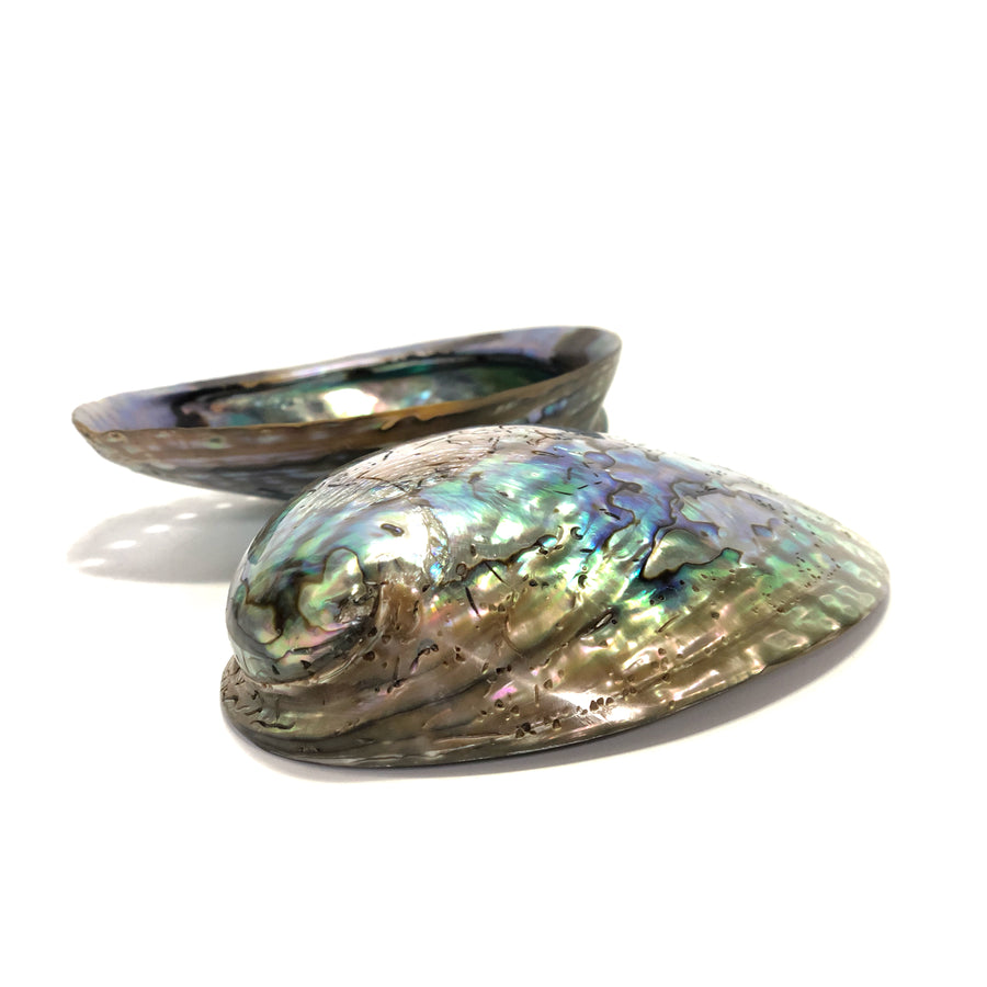 Mother of Pearl Paua Abalone Shell