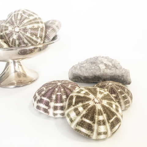 Sea Urchin Flat (Set 5)