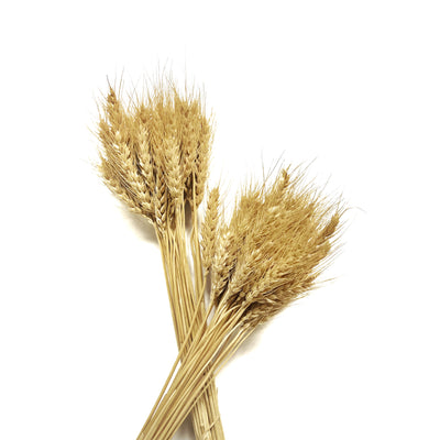 Dried Wheat Natural - Bunch