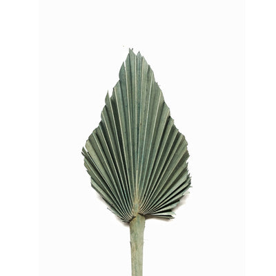 Dried Palm Spear - Silvery Green Set 5