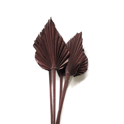 Dried Palm Spear - Burgundy Set 5
