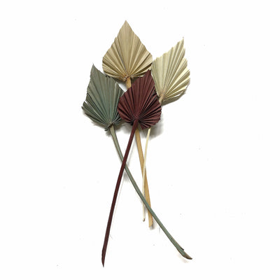 Dried Palm Spear - Natural Set 5