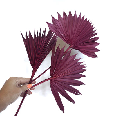 Dried Sun Palm - Burgundy Set 3