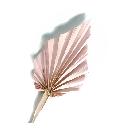 Dried Palm Spear - Pink Set 5