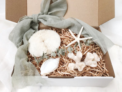 Coastal Coral & Shell Gift Set