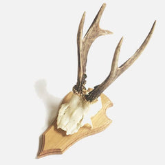 Deer Skull on Timber Mount - Sourceress The Store - 1