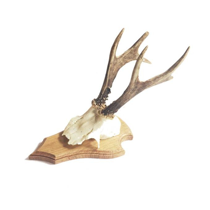 Deer Skull on Timber Mount