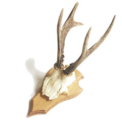 Deer Skull on Timber Mount - Sourceress The Store - 4