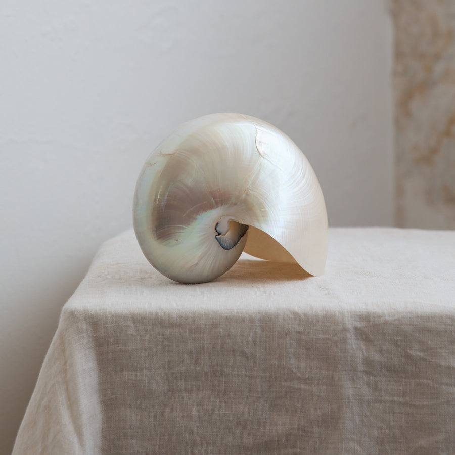 Nautilus Pearl Shell ***HIRE ONLY***
