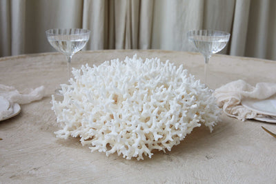 Real Birdsnest Coral **HIRE ONLY***