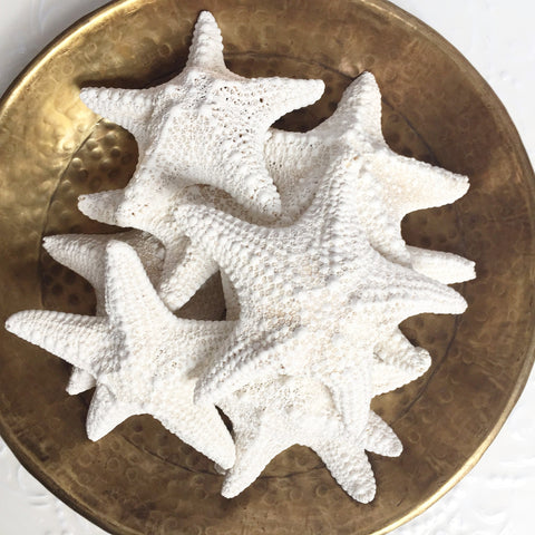Jungle Starfish ***Bulk Discounts***
