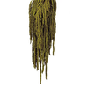 Preserved Amaranthus - Dark Green Bunch