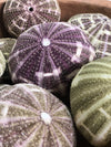 Sea Urchin Flat Set 5