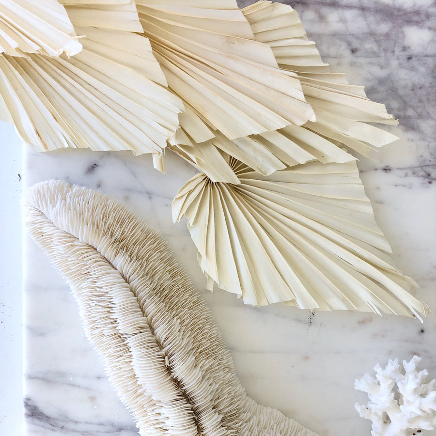 Dried Palm Spear - Cream White Set 5