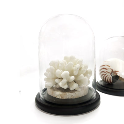 Glass Cloche Dome Terrarium 35 CM