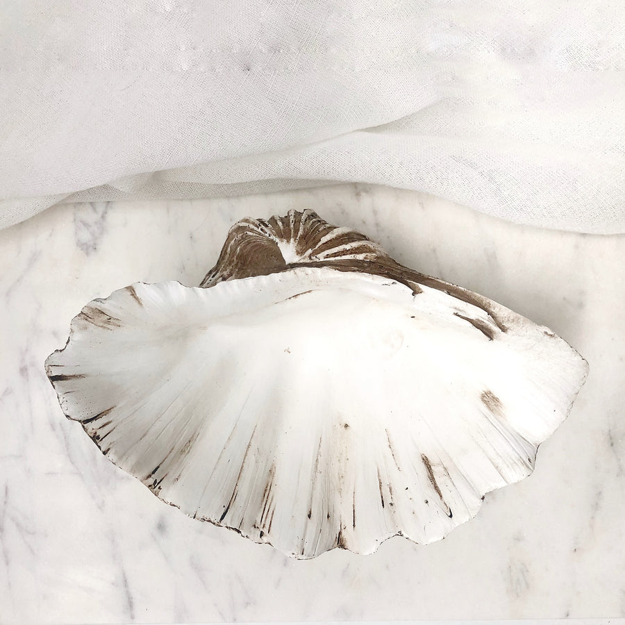 Resin Faux Giant Clamshell Clam 'Natural' 24 CM
