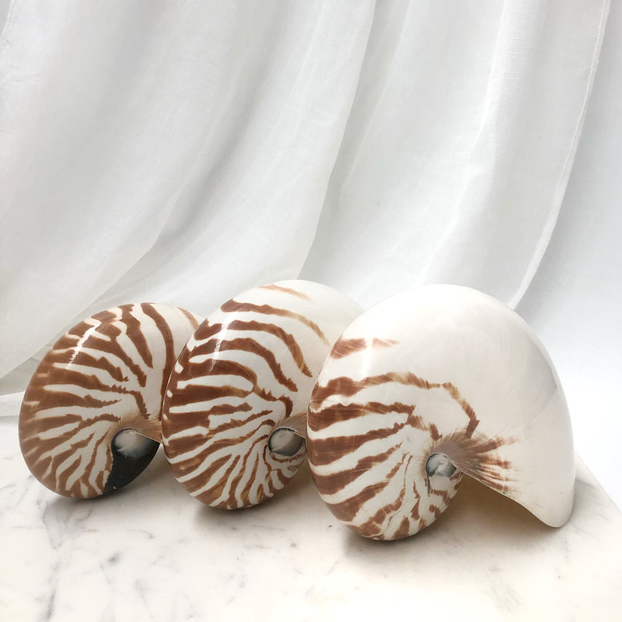 Nautilus Stripe Shell - Sourceress The Store - 3
