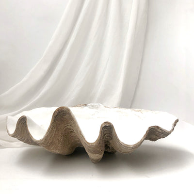 Resin Faux Giant Clamshell Clam 'Natural' 68 CM