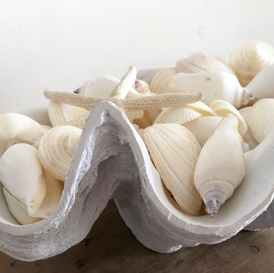 Resin Faux Giant Clamshell White 51 CM
