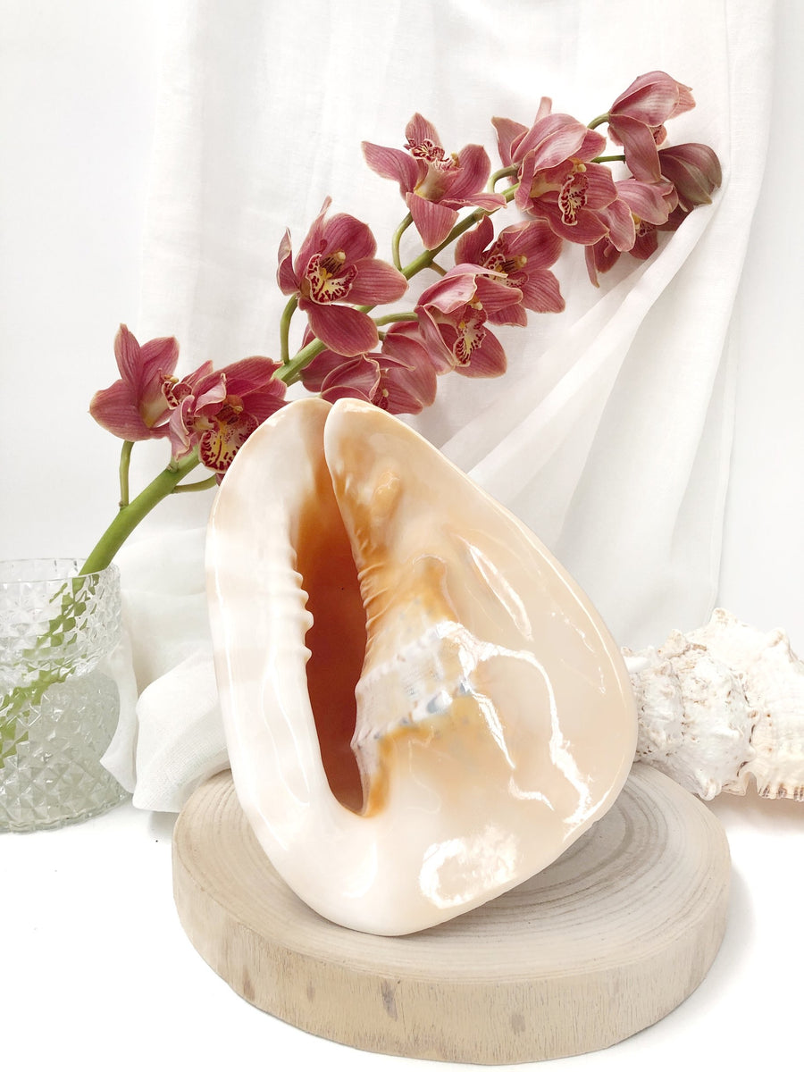 Large Shell Bundle Seafood Table Décor Set 4