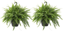 "Load image into Gallery viewer, 12"" hanging boston fern"