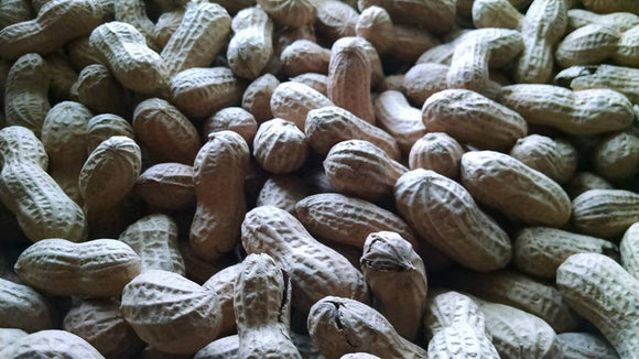 Fresh Roasted Peanuts
