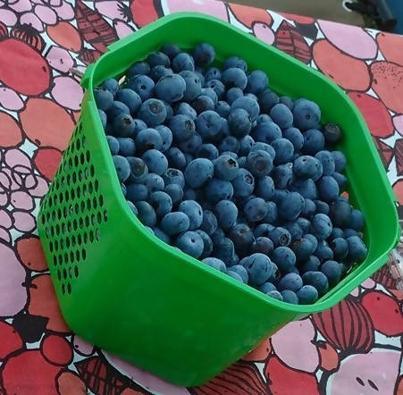 Blueberries (1 Gallon)