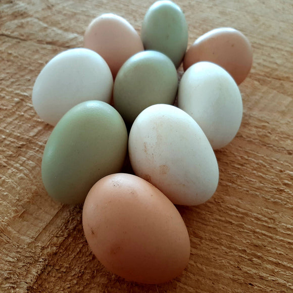 Chicken Eggs 1 Dozen