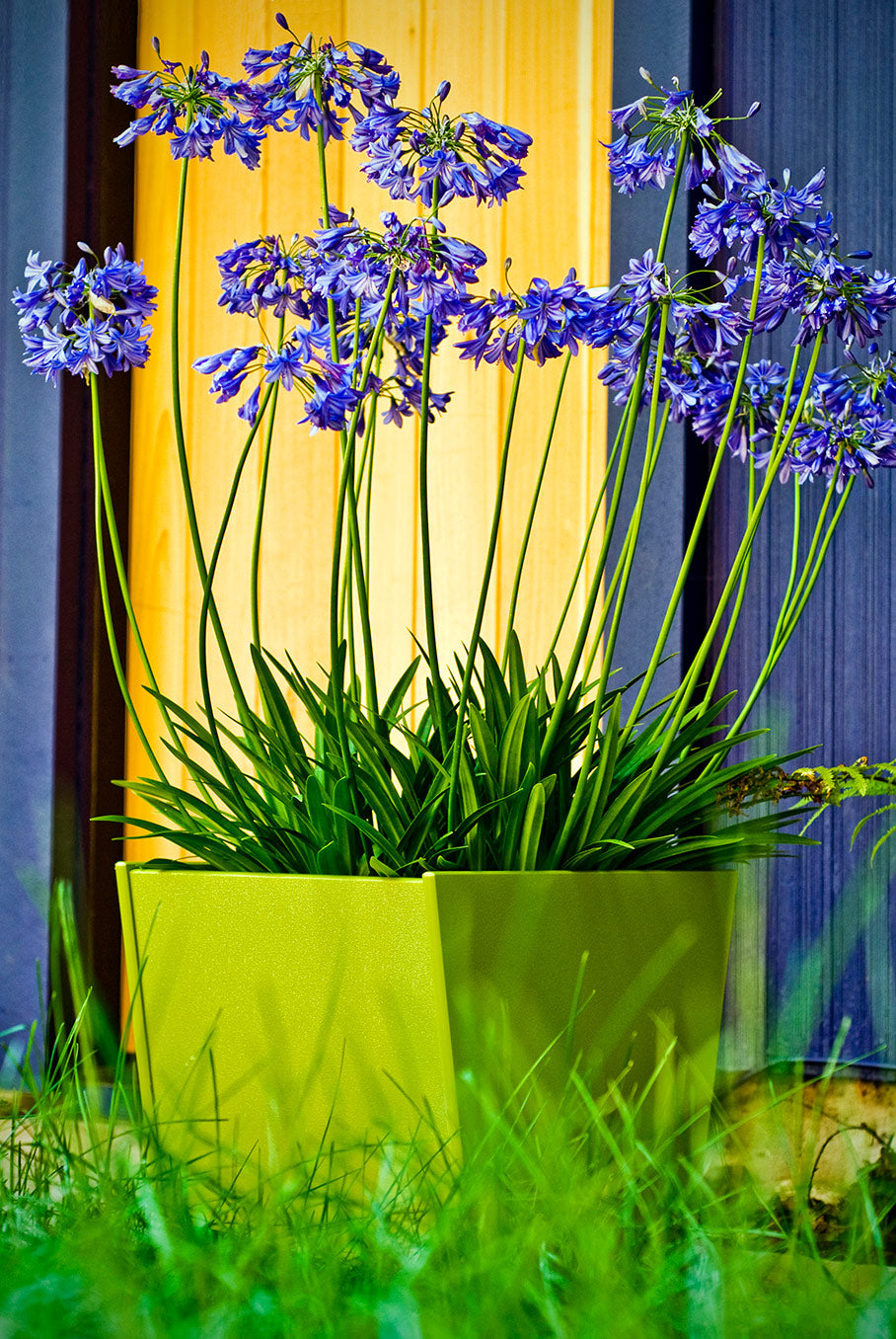 purple flowers in recycled plastic planter