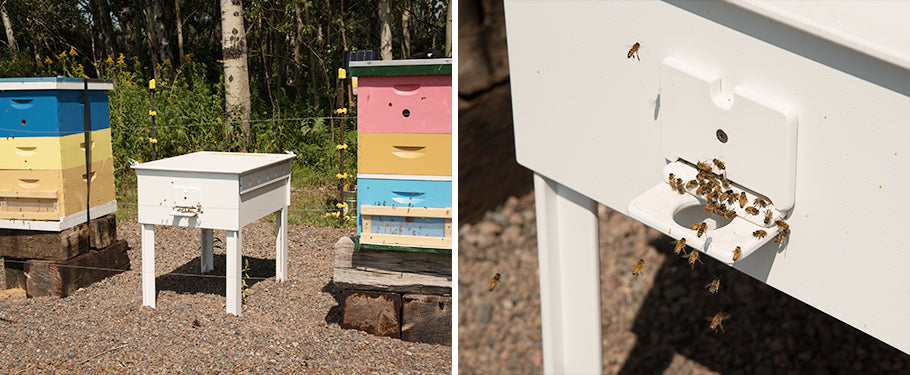 modern beehive next to traditional hive with bees