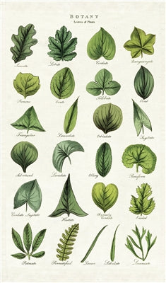 Cavallini & Co. Tea Towel - Botany Leaves