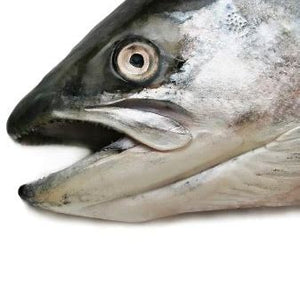 Salmon Heads x 2 - Food for dogs, cats and other pets online | Northampton Raw Dog Food!